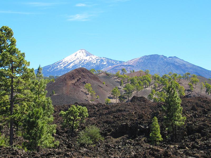 Pico del Teide - Flora & Fauna